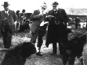 Bernese Mountain Dog historical photo exhibition Berna 1904